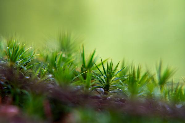 Webfotografik - Fotografie - Natur - Moos